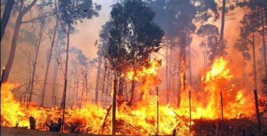 Hartenbos Fires